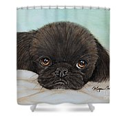 Buddy The Pekingese Shower Curtain