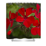 Pelargonium Shower Curtain