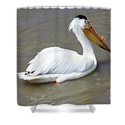 Pelecanus Eerythrorhynchos Shower Curtain