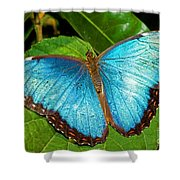 Peleides Blue Morpho Shower Curtain