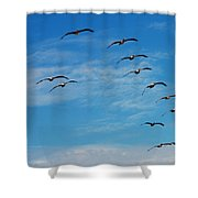 Pelican 001 Shower Curtain