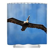 Pelican 002 Shower Curtain