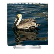 Pelican 02 Shower Curtain