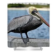 Pelican 2 Shower Curtain