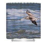 Pelican 4081 Shower Curtain