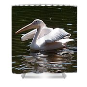 Pelican And Friend Shower Curtain