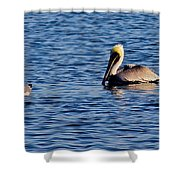 Pelican And Gull Shower Curtain
