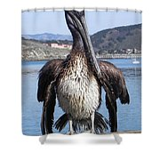 Pelican At Avila Beach Ca Shower Curtain