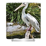 Pelican At Rest Shower Curtain