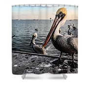 Pelican At The Pier Shower Curtain