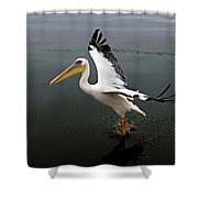 Pelican Blanc Pelecanus Onocrotalus Shower Curtain