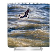 Pelican Briefly Shower Curtain