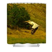 Pelican Buzz By Shower Curtain