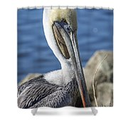 Pelican By The River Shower Curtain