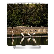 Pelican Clean Up Time Shower Curtain