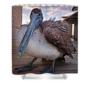 Pelican Close And Low Shower Curtain