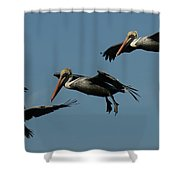 Pelican Collage Shower Curtain