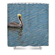 Pelican Drifting On Rippled Water Shower Curtain