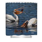 Pelican Fishing Buddies Shower Curtain by Kathleen Bishop