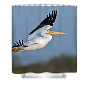 Pelican Flight  Shower Curtain