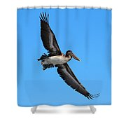 Pelican Flying High Shower Curtain