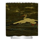 Pelican Flying Low Shower Curtain