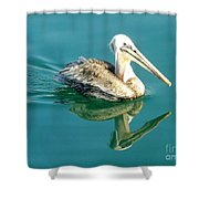 Pelican In San Francisco Bay Shower Curtain