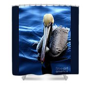 Pelican In The Bay Shower Curtain