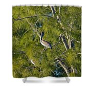 Pelican In The Trees Shower Curtain