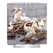 Pelican Island Shower Curtain