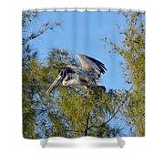 Pelican Landing Shower Curtain