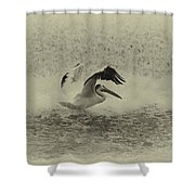 Pelican Landing In Black And White Shower Curtain by Thomas Young