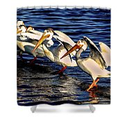 Pelican Logrolling Shower Curtain