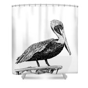 Monterey Pelican Pooping Shower Curtain
