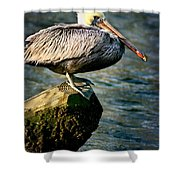 Pelican On A Pole Shower Curtain
