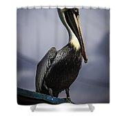 Pelican On Dock Shower Curtain