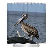 Pelican On Driftwood Shower Curtain