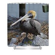Pelican On Rocks Shower Curtain