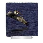 Pelican Over Water Shower Curtain