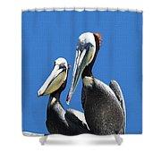 Pelican Pair At Oceanside Pier Shower Curtain