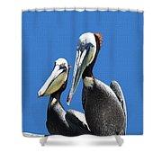 Pelican Pair Shower Curtain