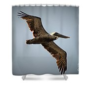 Pelican Pattern Shower Curtain