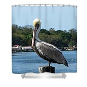 Pelican Point Shower Curtain