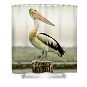 Pelican Poise Shower Curtain