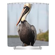 Pelican Pose Shower Curtain by Carol Groenen
