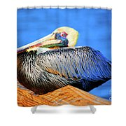 Pelican Rest Shower Curtain