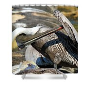 Pelican Scratch Shower Curtain by Adam Jewell