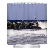 Pelican Sighting II Shower Curtain