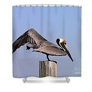 Pelican Stretch Shower Curtain