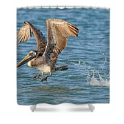 Pelican Taking Off Shower Curtain